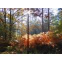 Un matin en forêt