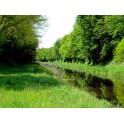 Canal d'Orleans