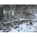 Neige en sous bois